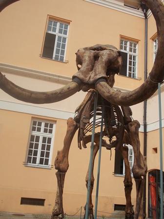 Kikinda mamut